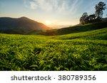 tea plantation in cameron... | Shutterstock . vector #380789356