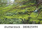 delicate branch of a tree in... | Shutterstock . vector #380825494