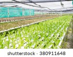 photograph of hydroponic...   Shutterstock . vector #380911648