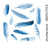 Collection Blue Feathers Of...