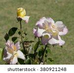 stunningly  magnificent... | Shutterstock . vector #380921248