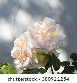 stunningly  magnificent... | Shutterstock . vector #380921254