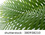 the leaf of the palm | Shutterstock . vector #380938210