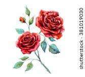 Stock photo watercolor drawing of red rose isolated on white background 381019030
