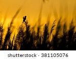 Singing Bird. Sunset Nature...