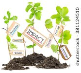 Small photo of Photo of plants growing from soil heaps with IMPACT conceptual words written on paper cards