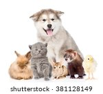 Stock photo large group of pets looking at camera isolated on white background 381128149