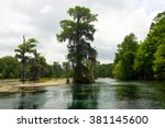 Swamp Cypress Tree With Hangin...