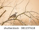 Small photo of Small passerine bird sitting on the leafless furcate branch of urban greenery with cream facade in the background. Wildlife photography