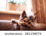 Stock photo beautiful puppy lying on a fluffy rug little dog looks clever and sad eyes man s best friend 381158074