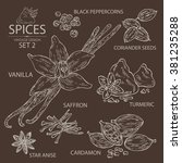 collection of spices . vanilla  ... | Shutterstock .eps vector #381235288
