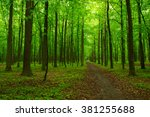 green forest and the path | Shutterstock . vector #381255688