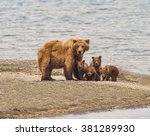 Grizzly Bear Family Of Five   ...