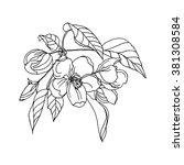 apple flower in blossom ... | Shutterstock .eps vector #381308584