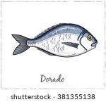 dorado. fish collection. vector ... | Shutterstock .eps vector #381355138