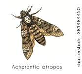 death's head hawk moth  hand... | Shutterstock . vector #381484450