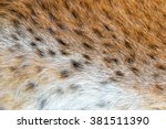 texture spotted wild animal fur ... | Shutterstock . vector #381511390