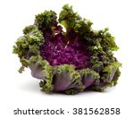 Fresh Kale Flower Isolated On...
