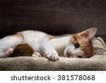 Stock photo the kitten plays with a ball of yarn kitten funny cat playing fun 381578068