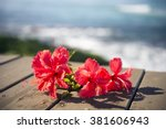 red hibiscus and the sea 4 | Shutterstock . vector #381606943