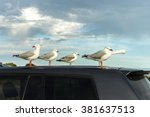Seagulls Resting On The Roof O...