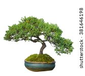 Bonsai Tree In Garden Isolated...