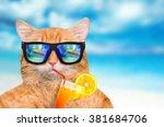 Cat Wearing Sunglasses Relaxin...