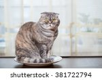 hungry cat sits in a plate and... | Shutterstock . vector #381722794