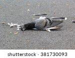 dead pigeon on street | Shutterstock . vector #381730093