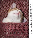Stock photo cute ginger kitten sleeps under a knitted soft blanket 381732313