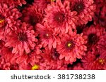 Red Flowers Cluster Together