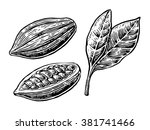 cacao bean and leaf. vector... | Shutterstock .eps vector #381741466
