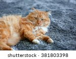 Stock photo fluffy red cat lying on a carpet 381803398