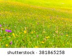 Wildflowers On A Meadow In A...