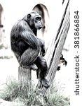 Chimpanzee Sitting In Funny...