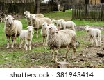 sheep in the countryside... | Shutterstock . vector #381943414