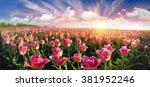 Field With Tulips Ukrainian...