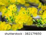 macro a ochna integerrima... | Shutterstock . vector #382179850