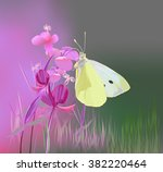 Cabbage Butterfly Can Eat...