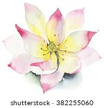 lilies and lotuses on a white... | Shutterstock . vector #382255060