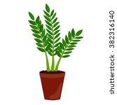 houseplant  zamioculcas. zz... | Shutterstock .eps vector #382316140