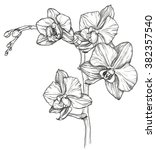 vector sketch of orchid flower... | Shutterstock .eps vector #382357540