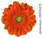 Orange Flower On  Isolated...
