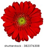 Red Flower On Isolated...