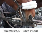 horse harness for carriage... | Shutterstock . vector #382414000