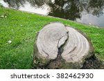 Abstract Of Tree Stump  In The...