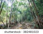 walkway in forest   Shutterstock . vector #382481023