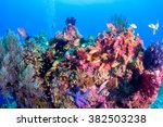 school of colorful fish on... | Shutterstock . vector #382503238