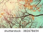autumn tree branch background... | Shutterstock . vector #382678654