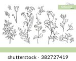 vector collection of hand drawn ... | Shutterstock .eps vector #382727419